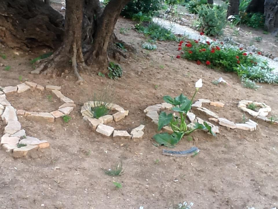 Voyage intiatique israel jardin des Oliviers