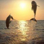 Nadège Pic_coach de vie pour les femmes_voyage initiatique_Açores_nager avec les dauphins